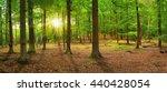 summer forest with sunlight ... | Shutterstock . vector #440428054