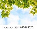 autumn maple leaves against... | Shutterstock . vector #440445898