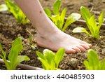 little  girl walking bare foot... | Shutterstock . vector #440485903