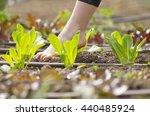 little  girl walking bare foot...   Shutterstock . vector #440485924