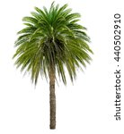Small photo of Palm tree with a large crown. Isolated over white.