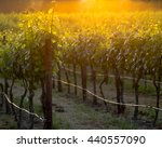 The Glowing Vines Of A Napa...