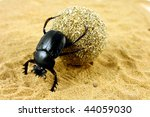 Beetle Pushing Its Ball Of Dung