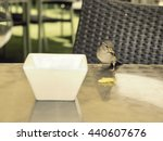 Sparrow Eating Chips On Table...