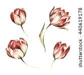 set of tulips. watercolor...   Shutterstock . vector #440619178