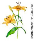 Lily Flower. Isolated On A...