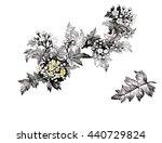 summer garden blooming flowers... | Shutterstock . vector #440729824