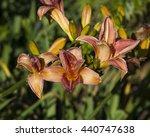 decorative  russet red yellow ...   Shutterstock . vector #440747638