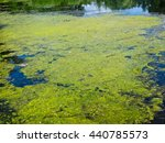 Green Algae On A Surface Of Th...