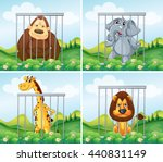 Wild Animals In Cage...