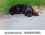 Stock photo friendship from different species black dog laying with orange cat on concrete road 440840080