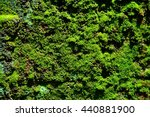 Green Moss Lichen Background O...