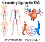 circulatory system for kids... | Shutterstock .eps vector #440894374