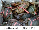 Mangrove Crabs Tied In The Box