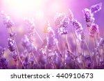 lavender field in sunlight | Shutterstock . vector #440910673