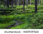 Wetland Forest With Green...