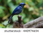 large niltava | Shutterstock . vector #440974654