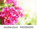 beautiful summer flowers... | Shutterstock . vector #441036334