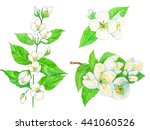 set of jasmine  white flowers... | Shutterstock . vector #441060526
