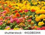 Flowers Zinnia  Flowers...