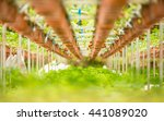 strawberry fruits on the branch ... | Shutterstock . vector #441089020