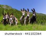 Six Curious Funny Donkeys...