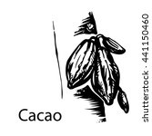 cacao tree. vector illustration ... | Shutterstock .eps vector #441150460
