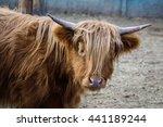 cow animal mammal brown milk | Shutterstock . vector #441189244