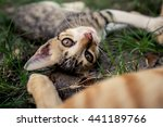 Stock photo little kitten playing on the grass 441189766