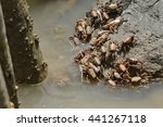 Crabs In The Marshes Of The...
