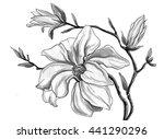 white magnolia flower branch in ... | Shutterstock . vector #441290296