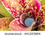 Bromeliad With Water.