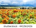 beautiful flower farm in japan... | Shutterstock . vector #441361426