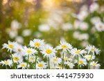 soft spring floral background ... | Shutterstock . vector #441475930