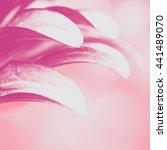 closeup chrysanthemum flower... | Shutterstock . vector #441489070