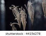 Dry Grass On A Dark Background