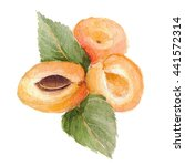 ripe apricots with leaves on... | Shutterstock . vector #441572314