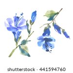 watercolor flower sketch on...   Shutterstock . vector #441594760