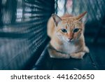 Stock photo cat in vintage color tone 441620650