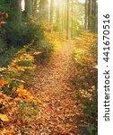 Autumn Landscape. Trail Covere...