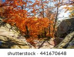 beautiful landscape  colorful... | Shutterstock . vector #441670648