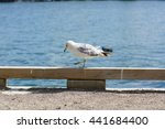Seagulls In Park