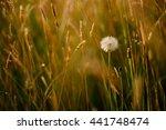 dandelions on a field. | Shutterstock . vector #441748474