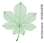 chestnut leaf isolated. vector... | Shutterstock .eps vector #441841858