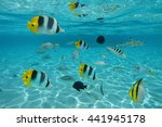 Shoal Of Tropical Fishes In...