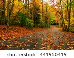 Autumn Landscape With Bright...