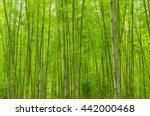 green bamboo forest | Shutterstock . vector #442000468