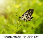 Monarch Butterfly In Butterfly...