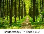 beautiful forest landscape in... | Shutterstock . vector #442064110