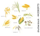 cereal plants with names set... | Shutterstock .eps vector #442083973